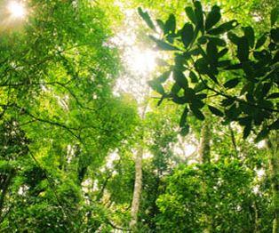 Jungle Crossing at Riviera Maya