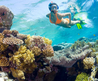Snorkeling Tour at Riviera Maya