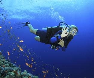 Puerto Vallarta Scuba Diving