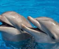 Swim with Dolphins at Riviera Maya
