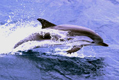 Dolphin Tour Package