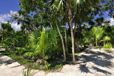 Riviera Maya Jungle Crossing