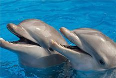 Swim With Dolphins Package